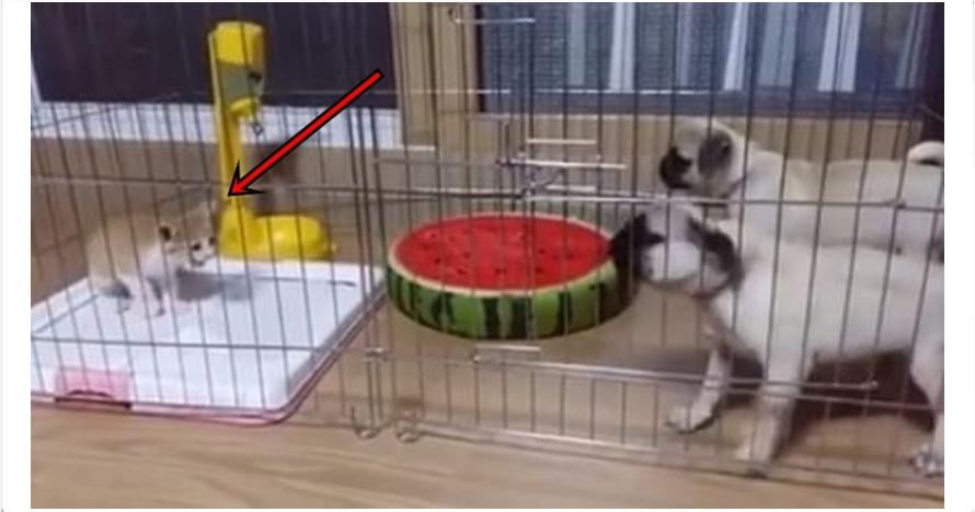 Video ini buktikan kalau anjing ternyata takut kucing, bikin ngakak