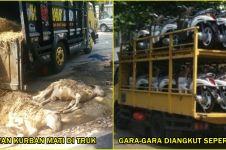 Bawa hewan kurban ngawur, belasan kambing ini mati semua di truk