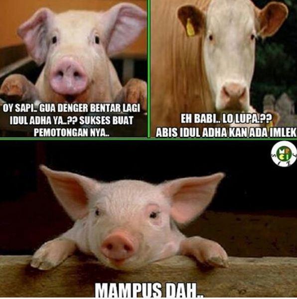 12 Meme lucu perasaan hewan sebelum dikurbankan ngocol ban ya