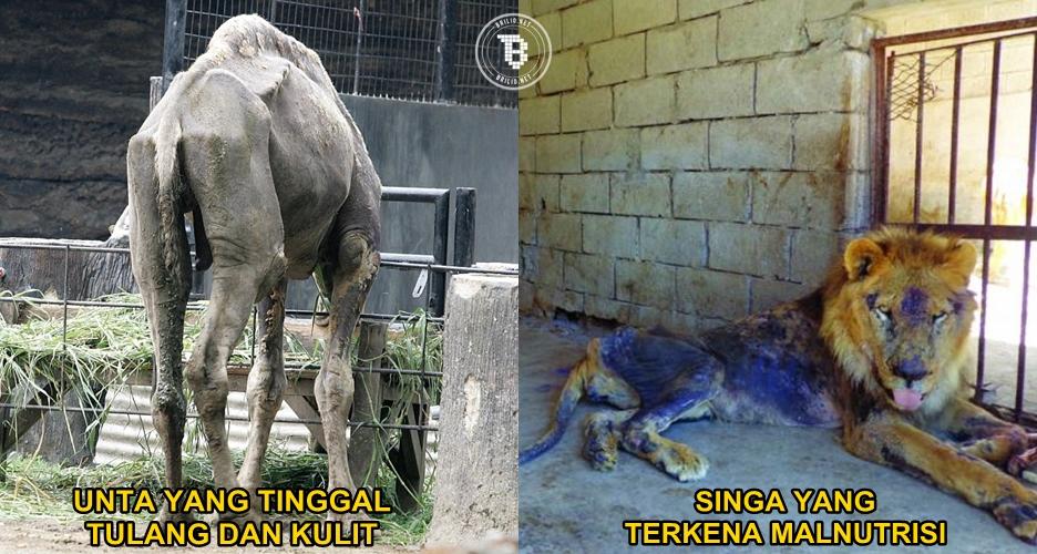 10 Foto mirisnya hewan yang tak terurus di berbagai kebun binatang