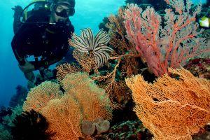 10 Surga bawah laut Indonesia yang bikin kagum dunia