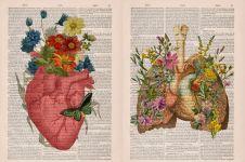 10 Ilustrasi anatomi tubuh pada kamus tak terpakai ini keren parah