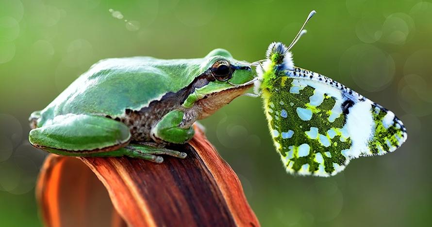 15 Potret kupu-kupu saat bersama hewan lainnya, kerennya luar biasa