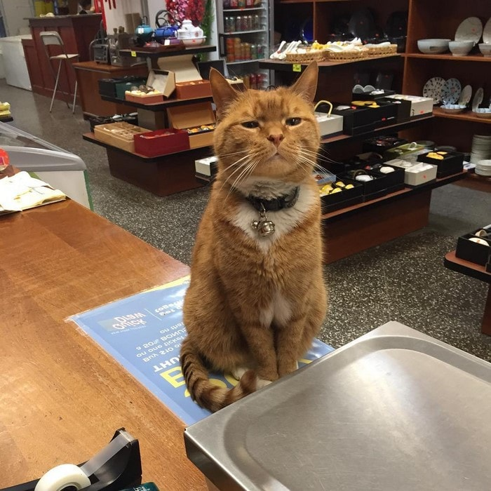 Kucing menjaga toko 9 tahun © 2016 guff.com