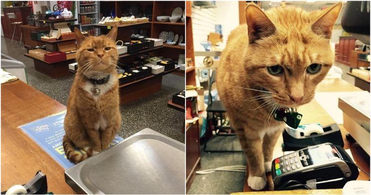 Kucing ini menjaga toko selama 9 tahun, tingkahnya menggemaskan banget
