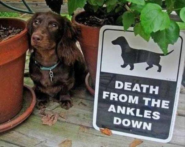 10 Binatang di balik papan 'Beware of Dog' ini bakal bikin kamu kaget