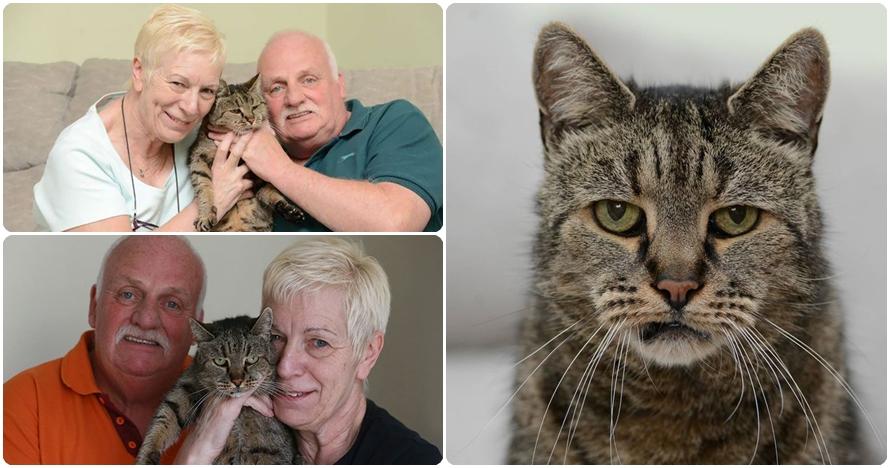 Disebut sebagai yang tertua di dunia, umur kucing ini bikin melongo