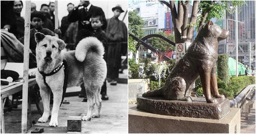 10 Foto hari-hari terakhir Hachiko ini bukti anjing hewan setia