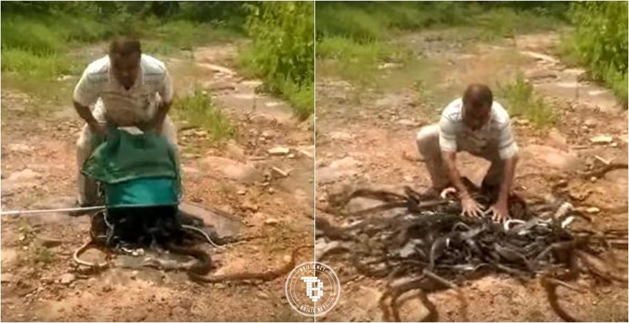 Dinilai bisa bantu petani, 285 ekor ular ini dilepas ke habitatnya