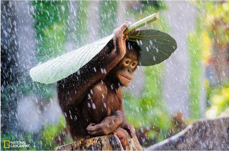 orangutan foto © 2016 brilio.net