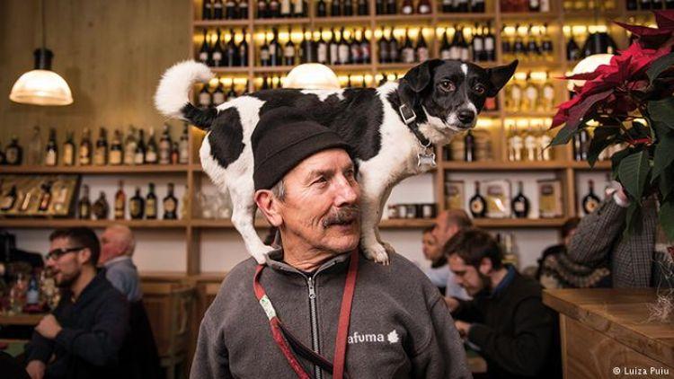 Anjing ini jadi model top, foto-fotonya sampai dibukukan lho