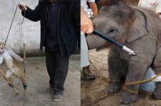 10 Foto ini tunjukkan mirisnya di balik layar hewan sirkus yang lucu