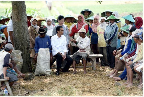 6 Potret keakraban Jokowi dengan petani, pemimpin idola rakyat