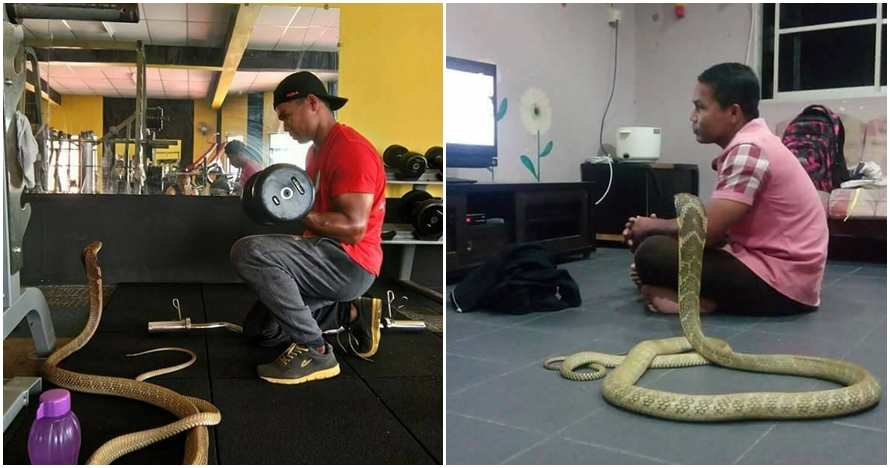 7 Foto persahabatan pria dengan ular kobra ini bikin merinding