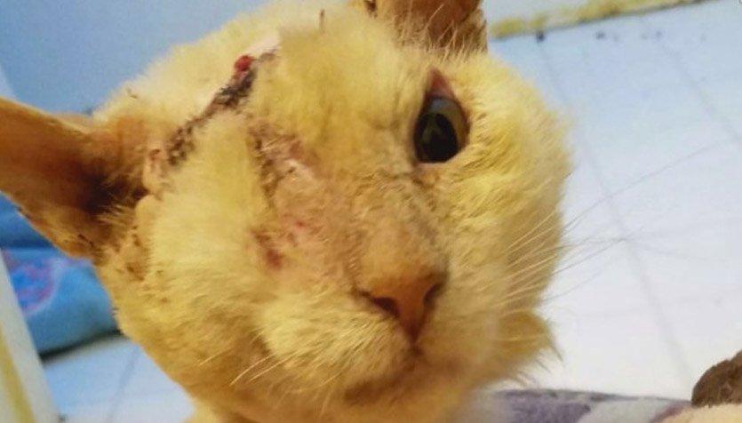 Buta karena kecelakaan, wajah kucing ini tetap lucu & bikin gemas