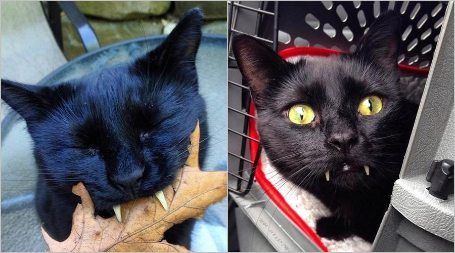 Kucing drakula ini hebohkan dunia maya, lucu menggemaskan gitu