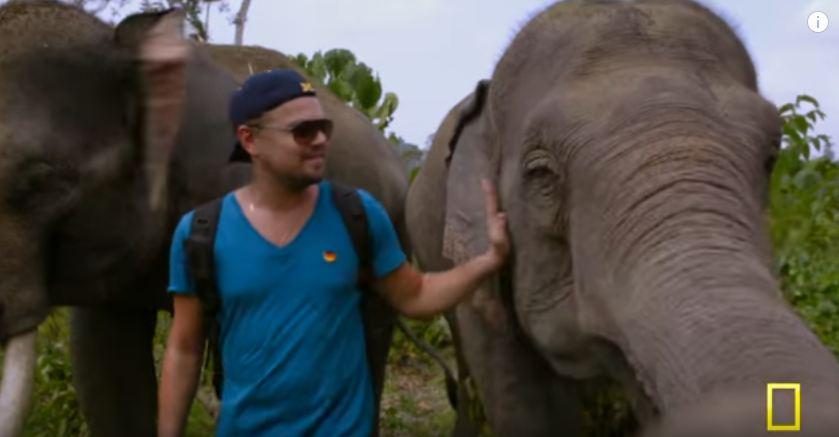 Film dokumenter Leonardo DiCaprio ini ungkap rusaknya hutan Indonesia