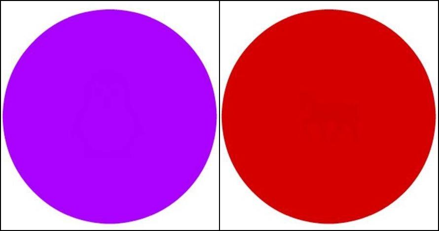 Matamu sehat kalau kamu bisa temukan objek di dalam 7 lingkaran ini
