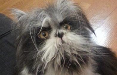 Ini anjing atau kucing? Foto viral ini bikin netizen berdebat sengit