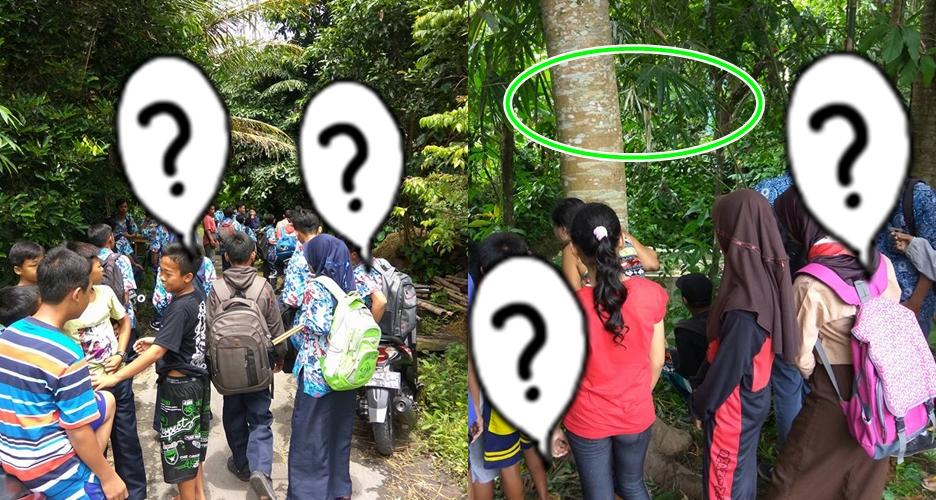 Fenomena pohon nangis di Magelang ini bikin geger, mistis atau ilmiah?