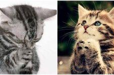 16 Ekspresi hewan sedang 'berdoa' ini super ngegemesin, cubanget dah