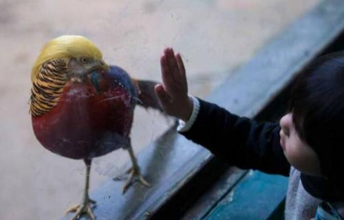 jambul burung trump shanghaidaily.com