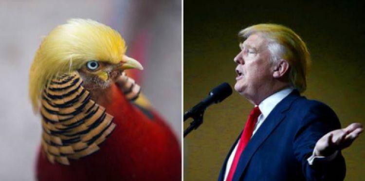 Punya jambul bak rambut Donald Trump, foto burung ini viral banget