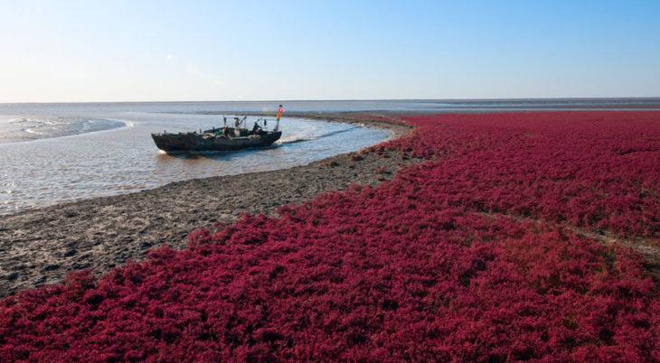 pantai berwarna merah di china © 2016 cubebreaker