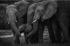 12 Foto saat hewan tunjukkan kasih sayang kepada anaknya ini keren