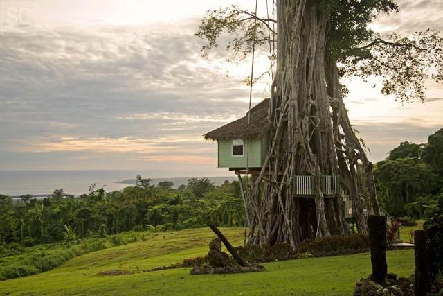 Rumah pohon yang bikin melongo © 2016 berbagai sumber
