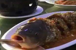9 Masakan ini disajikan dengan menyiksa hewan, duh kejam banget
