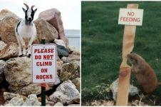 12 Foto lucu hewan langgar aturan, bikin susah nahan tawa