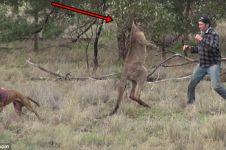 Pria ini nekat melawan kanguru liar demi selamatkan anjingnya