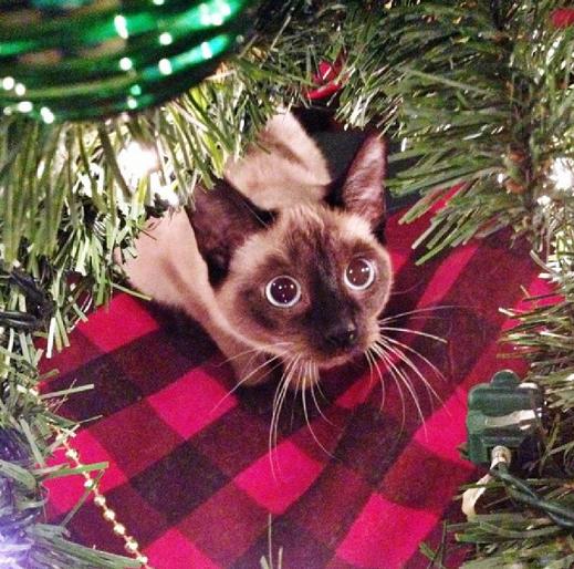 Kucing Pohon Natal © 2016 brilio.net
