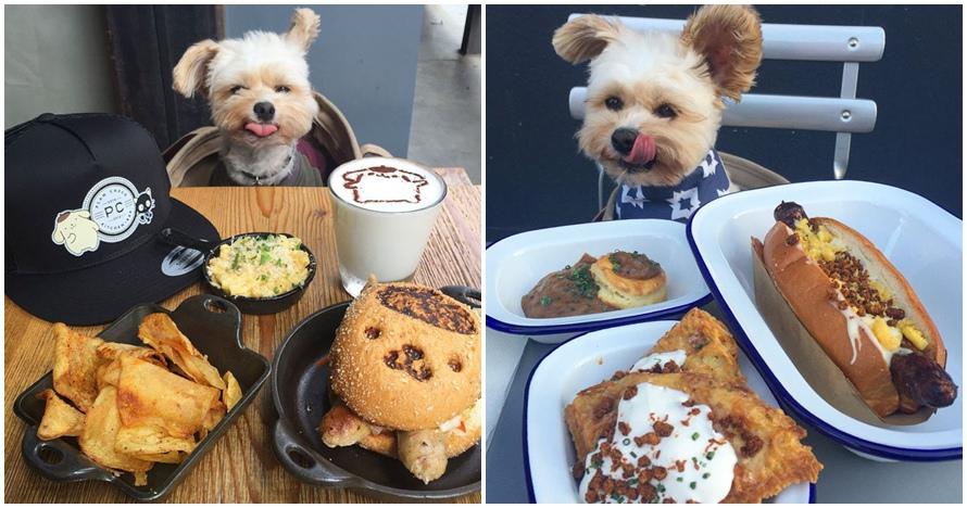 15 Foto lucu anjing makan di restoran ini bikin gemes banget