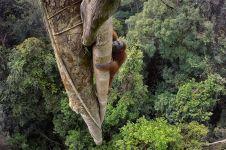 15 Foto terbaik National Geographic 2016, ada foto dari Borneo lho