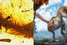Ditemukan ekor dinosaurus berusia 99 juta tahun, begini penampakannya
