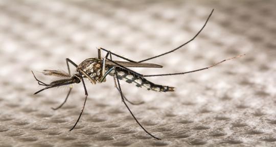 Peneliti gunakan biotech untuk perangi virus Zika