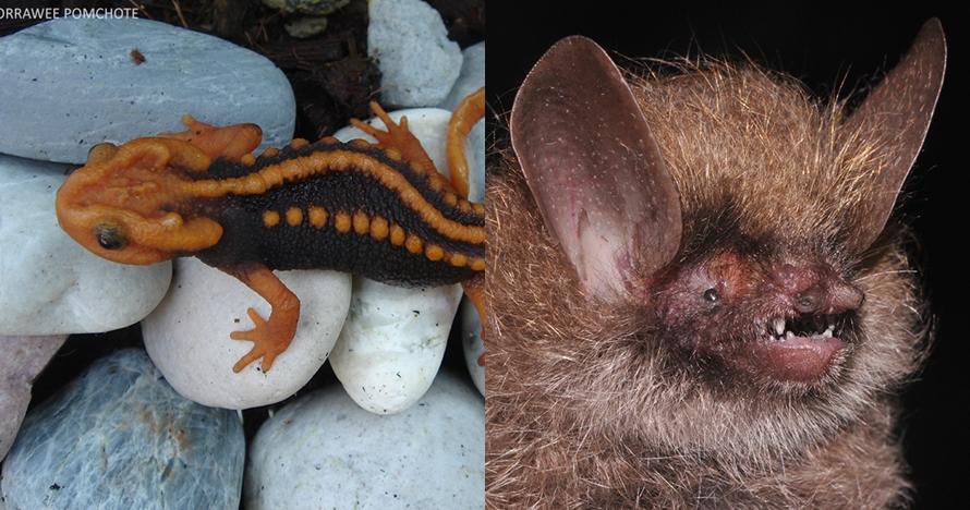 8 Spesies hewan ini baru ditemukan, ada dari Indonesia nggak ya?