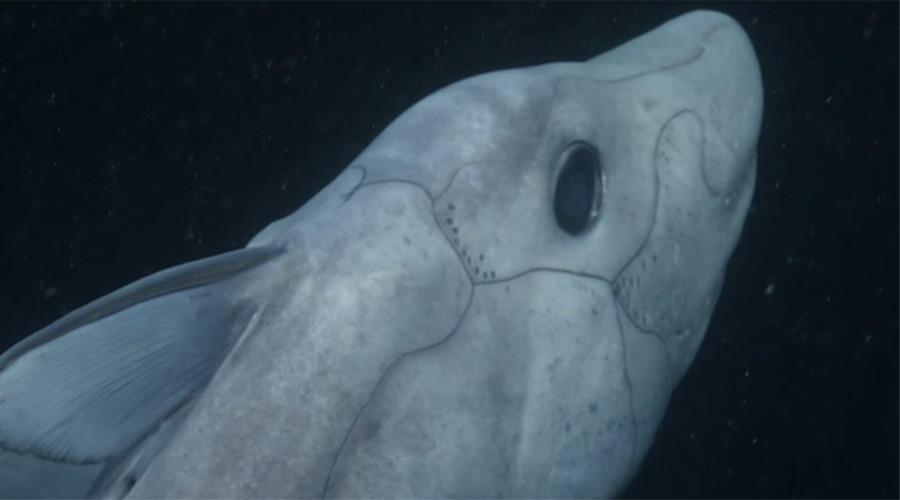 Dari hiu kepala dua sampai hiu hantu, ini 7 kisah hewan teraneh 2016