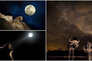 14 Potret menakjubkan alam liar Afrika di malam hari, luar biasa!