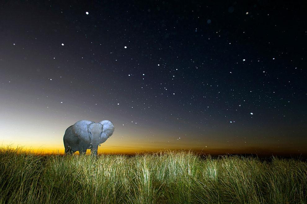 potret menakjubkan alam liar Afrika di malam hari © 2016 Brendon Cremer