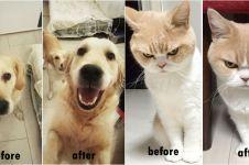 10 Foto hewan peliharaan sebelum & sesudah saat dipuji ini bikin gemes