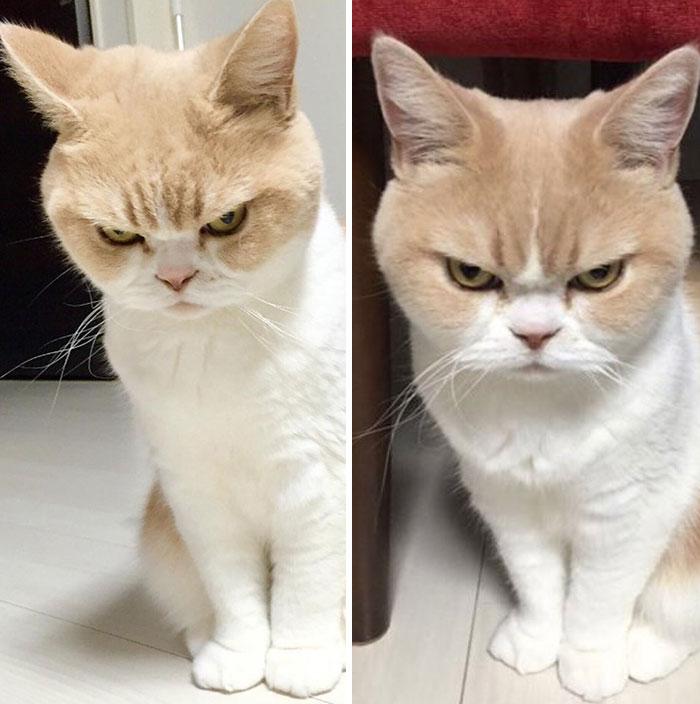 foto hewan peliharaan sebelum dan sesudah dipuji © 2016 boredpanda.com