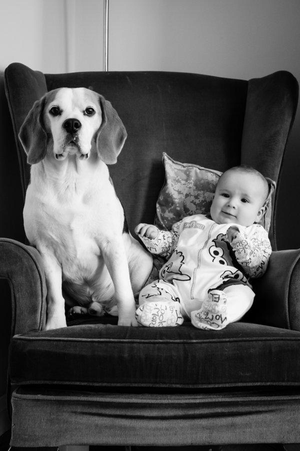 Foto Stan And Jasper 5 © 2017 brilio.net