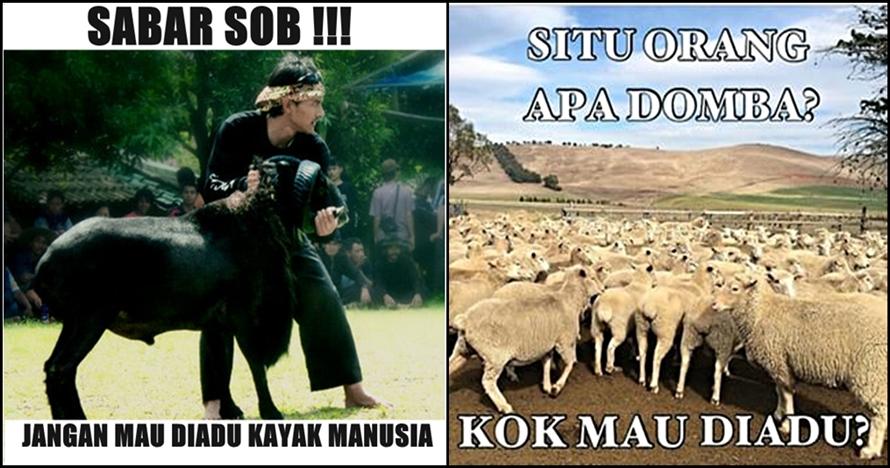 10 Meme Adu Domba Ini Bikin Sadar Kalau Kamu Manusia