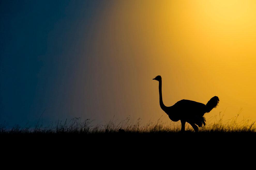 foto siluet alam liar afrika © 2017 Marc Mol