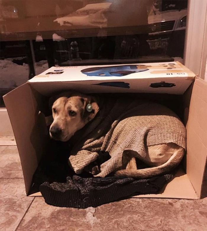 cuaca buruk anjing © 2017 brilio.net