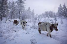 9 Foto desa terdingin di bumi, suhunya pernah sampai -71,2 °C
