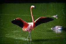 10 Jenis burung air ini singgah di pesisir Bengkulu, bulunya indah lho